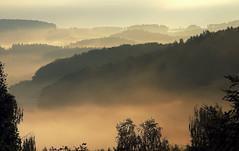 golden mist before sun rise (be there...) Tags: mist sunrise germany landscape bavaria nikon nebel landschaft wald falkenstein oberpfalz bayerischer d90 nebelbnke