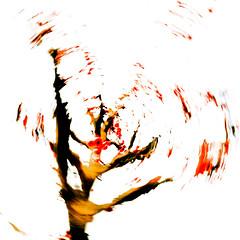 Red Berries III (wide-angle.de) Tags: treesii de germany digital y201602