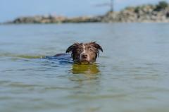 Kyra (mcvmjr1971) Tags: 50mm d7000 bordercollie cachorro dog f18d fun junp lago mmoraes nikkor nikon niteri play praiadeitaipu regioocenica run sol curtoniteroi