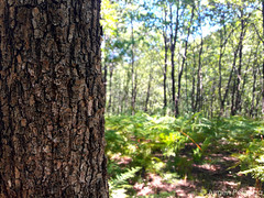 Forest (Jurgen Pergega) Tags: forest beautiful woods green amazing tree traveling albania albanien wald nature natur rreshen wandern