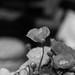 236-365 Poppies
