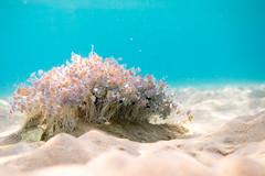 Oasis (Peter Zabukovnik) Tags: underwater algae sand sea