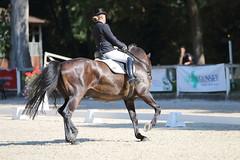 IMG_7573 (dreiwn) Tags: dressage dressur dressuur pferd reitturnier turnierreiten pferdesport horse horseback horseriding equestrian reitverein dressurprfung kandare doublebridle reiten pferde reitplatz ridingarena