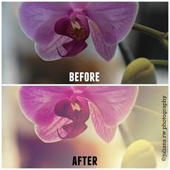 BeforeAfter4 (Juliana RW) Tags: flowers