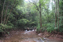 Longtan National Forest Park, Guiping/ 1951 (Petr Novk ()) Tags: guiping  longtan  longtannationalforestpark   china na  guangxi  asia asie   forest stream water habitat subtropicalforest  nature