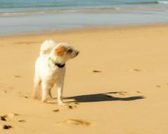 The Dog (Marcel Weichert) Tags: algarve alvor atlanticocean beach dog europe mar oceanoatlântico portugal sea summer wave faro pt