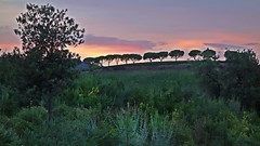 Un tramonto di-vino -- A diwine sunset (Jambo Jambo) Tags: tramonto sunset cantina winery lemortelle fattorialemortelle antinori marchesiantinori castiglionedellapescaia grosseto maremma maremmacountryside maremmatoscana toscana tuscany italia italy vino wine sonydscrx100 jambojambo mortelle mortella mirtoselvatico myrtle myrtus pini pines
