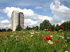 One tower, lots of flowers (Mr Grimesdale) Tags: wildflowers northwood knowsley kirkby stevewallace ruffwood mrgrimesdale kirkbywildflowers northwoodkirkby