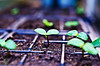 Seedlings (Damien Cox) Tags: uk macro nature nikon damiencox dcoxphotographycom