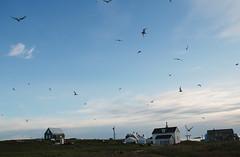 DSC_0363 (sara.fludd) Tags: ocean summer landscape island iceland north summerhouse islanda flatey