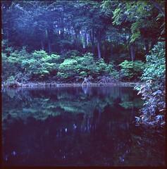 (bensn) Tags: hasselblad 500cm carl zeiss 80mm f28 medium format film velvia 100 night dark longexposure lake reflection branch trees woods japan
