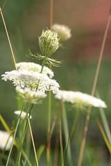noch eine runde spaziergang (ingejahn) Tags: sommer pflanzen grn andechs wald spaziergang seefeld