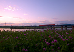 (akashirokiiro) Tags: sunset train lumix railway hachinohe   redclover trifoliumpratense