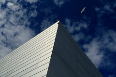 Sea gull exploring modern architecture (+PeterCH51+) Tags: light sky house building oslo norway architecture clouds opera seagull scandinavia northerneurope nordiclight mywinners osloopera scandinavianlight peterch51