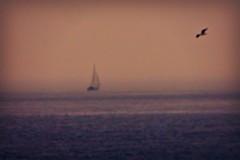 painted scene (b16dyr) Tags: mist scotland yacht fife gull pittenweem scotchmist fifecoastalwalk seaharr seahar