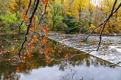Waterfall (alankin) Tags: trees 15fav water leaves reflections landscape geotagged landscapes branches photographers autumnleaves fallfoliage rivers photowalk delaware wilmington waterreflections henryclay dccc 25views hagleymuseum xfav brandywinecreek niknala nikond300 2nov2008 nikkorafvrzoom18200mmf3556gifed delawarecountycameraclub 1300089au geo:lat=39776586 geo:lon=75575277