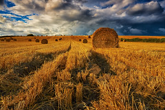 Photo by Mark Mullen (HumanTheme.com) Tags: uk rural landscape countryside farm farming scenic crops agriculture northyorkshire agricultural strawbales wilton pickering photostory a170 roundbales canon1740f4 threateningsky rotoballe humantheme canon5dmk3 markmullenphotography