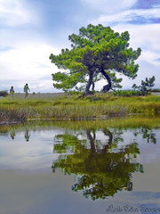 Illa de Arousa (Luis Diaz Devesa) Tags: espaa color verde green water landscape spain agua europa paisaje galicia galiza pontevedra naturalpark parquenatural illadearousa isladearosa carreirn mygearandme mygearandmepremium mygearandmebronze mygearandmesilver mygearandmegold parquenaturaldecarreirn luisdiazdevesa natureofcarreirn