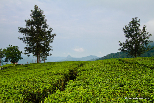 Step Into The World Of Tea Gardens At Munnar, Kerala