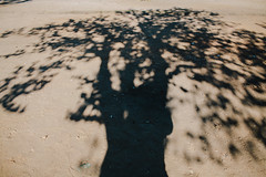 #mmm cemSoldos09 190812 (.maique.) Tags: shadow music tree festival work lookdown cemsoldos bonssons vscofilm visualsupplyco