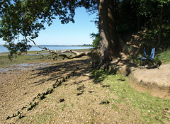 Fallen tree, two blue chairs and Anglo-Saxon fish trap, Holbrook bay, river Stour, Suffolk (vanishing eye) Tags: beach suffolk mud estuary driftwood archeology oldjetty riverstour harkstead lowerholbrook fallentreeatholbrookbay anglosaxonfishtrap