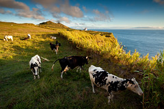 Dining with a view (marco_raposo) Tags: sunset sea portugal canon cows azores mosteiros 50d flickraward ilustrarportugal mygearandme mygearandmepremium mygearandmebronze