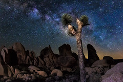 Galactic Joshua Tree (muhammad_elarbi) Tags: life california longexposure nightphotography blue light red wild sky orange usa tree green texture nature colors night canon dark lens stars fun outside photography nationalpark rocks colorful exposure nightimages nightscape purple bright outdoor background live space joshuatree center hobby astro galaxy nebula astrophotography astronomy nightsky 28 mm f28 ef foreground darkmatter galactic milkyway 1635 lightpaint eflens canonusa teamcanon canon70d