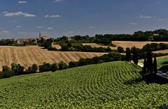 quand le Gers prend des airs de Toscane (jean-marc losey) Tags: france gers agriculture village bocage tournesol d700