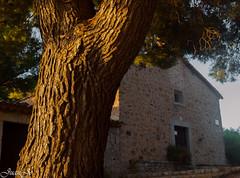 Sant Llorens (juanjo pealver) Tags: iglesi tuent cala lorenzo ermita siglo arbol medieval templario
