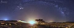 sunrise at midnight ?! (Israel Nature Photography by Ary) Tags: canon apsc israel night stars milkyway tokina 1116mm desert tree nature