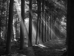 The Lighted Wood B (Drummerdelight) Tags: light sunlight lightbeams beamsoflight sun