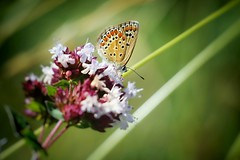 Sweet butterfly (Caro & Co) Tags: natureshooters naturephotography naturelovers butterfly contrast composition landscapeshooters wildlife