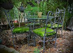 A Natural Work of Art (BKHagar *Kim*) Tags: bkhagar table glass chair chairs metal moss mossy green growing estatesale find treasure sale workofart nottositon courtyard outdoor shopping whimsical julesphotochallengegroup