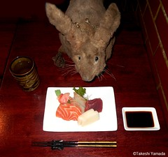 Dr. Takeshi Yamada and Seara (Coney Island Sea Rabbit) at the Sake Japanese sushi buffet restaurant in Brooklyn, NY on March 27, 2016.  20160527Fri DSCN6203=3035mC. assorted sashimi (searabbits23) Tags: searabbit seara takeshiyamada  taxidermy roguetaxidermy mart strange cryptozoology uma ufo esp curiosities oddities globalwarming climategate dragon mermaid unicorn art artist alchemy entertainer performer famous sexy playboy bikini fashion vogue goth gothic vampire steampunk barrackobama billclinton billgates sideshow freakshow star king pop god angel celebrity genius amc immortalized tv immortalizer japanese asian mardigras tophat google yahoo bing aol cnn coneyisland brooklyn newyork leonardodavinci damienhirst jeffkoons takashimurakami vangogh pablopicasso salvadordali waltdisney donaldtrump hillaryclinton endangeredspecies save