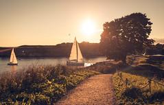 Revival (Bunaro) Tags: vallisaari fortress island sunset sail boats tree dusk road helsinki suomi finland europe summer