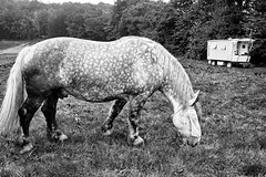 _DSC8862 (grard Laurent) Tags: noiretblanc blackandwhite cheval horse roulotte voyage libert freedom trip road sony a7rm2 fe28mmf2 caravan