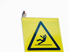 Warning (danliecheng) Tags: abstract animal bird board dangerous fall guard nature people safety sign signboard slippery stare swallow triangle warning yellow