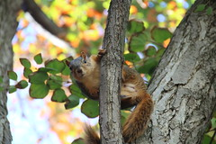 100/365/3022 (September 19, 2016) - Squirrels in Ann Arbor at the University of Michigan (September 19, 2016) (cseeman) Tags: squirrels annarbor michigan animal campus universityofmichigan umsquirrels09192016 summer eating peanut septemberumsquirrel cavity cavitynest squirrelcavitynest knothole 2016project365coreys yearnineproject365coreys project365 p365cs092016 356project2016