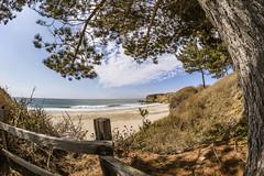 Cove Beach (matman73072) Tags: cove beach sand sky surf ocean clouds fisheye anonuevo california trees fence
