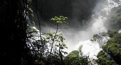 Cataratas del Iguazú (dumultien) Tags: southamerica argentina argentine vert waterfalls cataratas iguazu chutes misiones sudamerica amériquedusud americadelsur