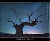 El lenguaje del mundo. Explore- 7/8/2012 (Francisco J. Pérez.) Tags: naturaleza art nature night spain plantas negro cielo nocturnas armonía sigma1020mm pentaxart pentaxk5 ´franciscojpérez