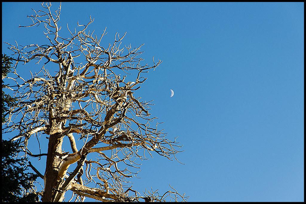 Mount San Jacinto State Park - Mount San Jacinto State Park