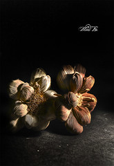 زهور بلا لون .. ولا حياة (maan.pho) Tags: life rose still hdr ورود كريم قرآن maan صورة تصوير الحياة بوكس رمضان قديم معالجة أحادي زهور داخلي سوفت اضاءة الصامتة أثريات تكوين