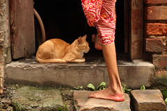 Mid day slumber (Rajib Singha) Tags: india man home animal interestingness searchthebest dailylife kolkata westbengal flickriver kumortuli