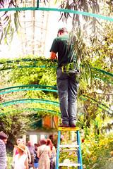 Bronx Botanical Gardens (alyssa roth) Tags: nyc light people plants newyork green garden jobs bronx strangers botanicalgardens