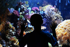 Smithsonian's National Zoological Park, Washington, D.C. - Invertebrate Exhibit (Michael.Glass) Tags: ocean life pink blue boy sea orange fish color texture water colors beautiful silhouette coral dark wonder zoo smithsonian dc washington kid amazing colorful pretty underwater child tank purple bright little earth vibrant gorgeous salt dream bubbles exhibit imagination aquatic dim reef gaze brilliant saltwater invertebrate aspire