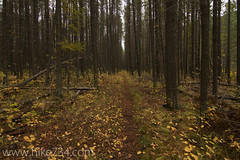 "Fall Lodgepole Forest • <a style=""font-size:0.8em;"" href=""http://www.flickr.com/photos/63501323@N07/7797603506/"" target=""_blank"">View on Flickr</a>"