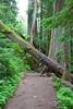 Mount Rainier (Zlatko Unger) Tags: road park trip trees summer vacation clouds washington roadtrip mount national rainier unger vacationing zlatko zlatkounger zlatty