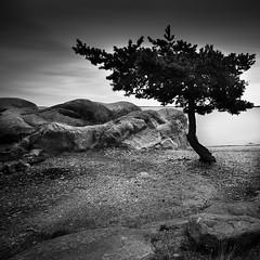 My Only Tree.. (Peter Levi) Tags: longexposure sea blackandwhite bw tree blancoynegro water clouds sand rocks sweden stockholm le 1740mm blackwhitephotos nd110 5dmkii mygearandme mygearandmepremium mygearandmebronze mygearandmesilver