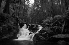 For Jason...... (McCoy352) Tags: longexposure trees light blackandwhite bw jason water creek forest fun waterfall washington shadows cloudy hiking wideangle pacificnorthwest olympicnationalpark tamron1750 canyoncreekfalls solducarea